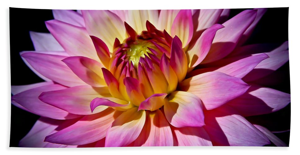 Dahlia Bath Sheet featuring the photograph Blossoming Flower by Athena Mckinzie