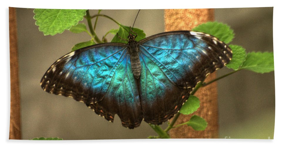 Butterfly Bath Towel featuring the photograph Blue And Black Butterfly by Jeremy Hayden