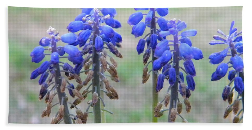 Blue Hand Towel featuring the photograph Blue Bells 2 by Nathanael Smith