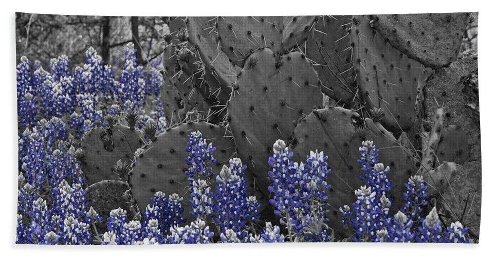 Wildflowers Hand Towel featuring the photograph Blue Bonnet Cactus by Douglas Barnard