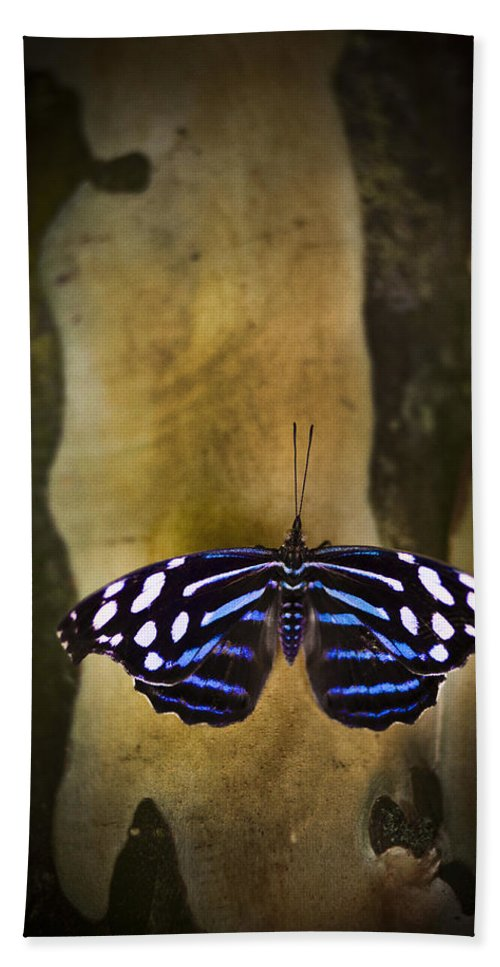 Florida Bath Sheet featuring the photograph Blue Butterfly by Bradley R Youngberg