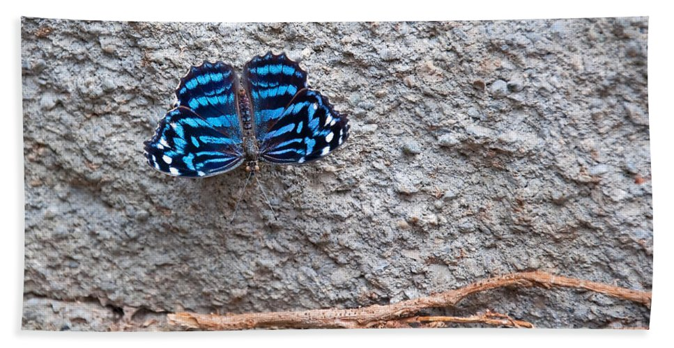 Butterfly Hand Towel featuring the photograph Blue Butterfly Myscelia Ethusa Art Prints by Valerie Garner