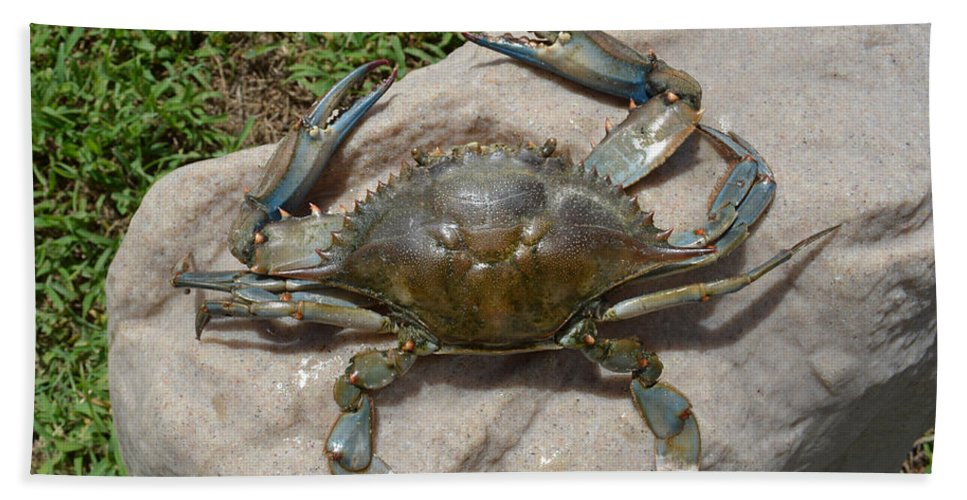 Crab Hand Towel featuring the digital art Blue Crab On The Rock by To-Tam Gerwe
