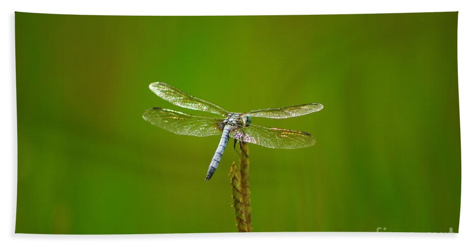 Blue Dasher Dragonfly Bath Sheet featuring the photograph Blue Dasher Dragonfly by Kitrina Arbuckle