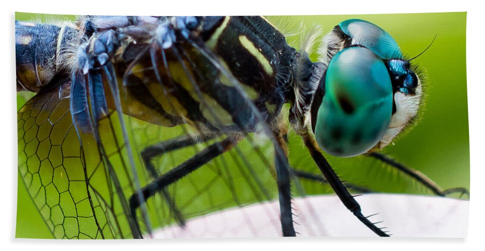 Dragonfly Bath Sheet featuring the photograph Blue Dasher by Gaurav Singh