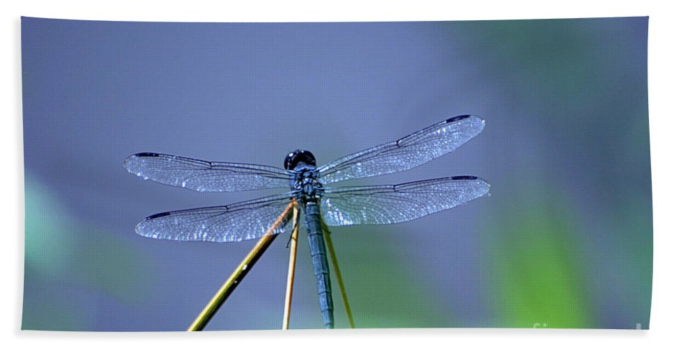 Dragon Fly Hand Towel featuring the photograph Blue Dragon by Living Color Photography Lorraine Lynch
