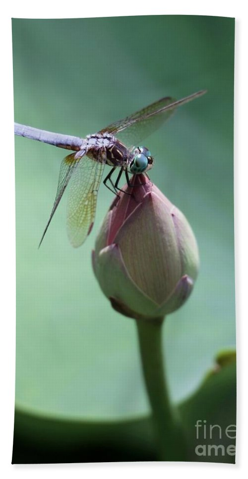 Dragonfly Bath Sheet featuring the photograph Blue Dragonflies Love Lotus Buds by Sabrina L Ryan