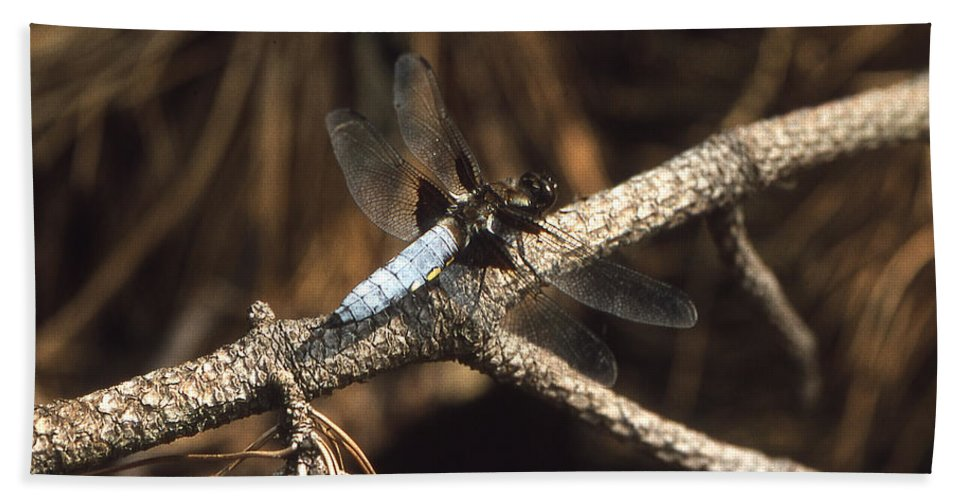 Dragonfly Bath Sheet featuring the photograph Blue Dragonfly by Richard Thomas