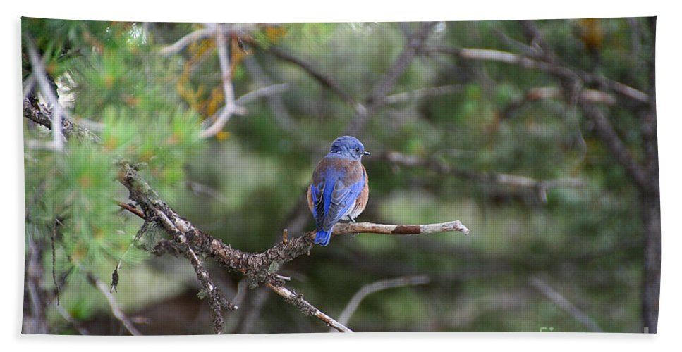 Bird Bath Sheet featuring the photograph Blue Feathers by Susan Herber