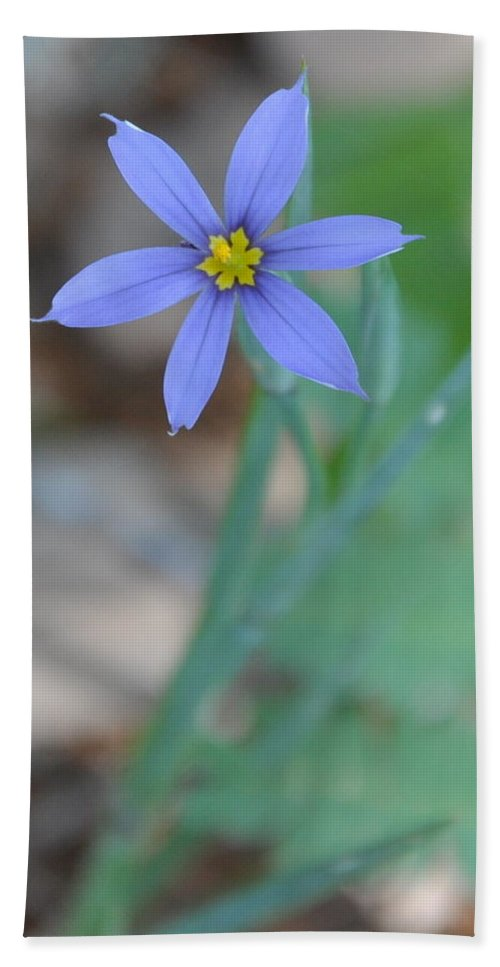 Blue Bath Towel featuring the photograph Blue Flower by Frank Madia
