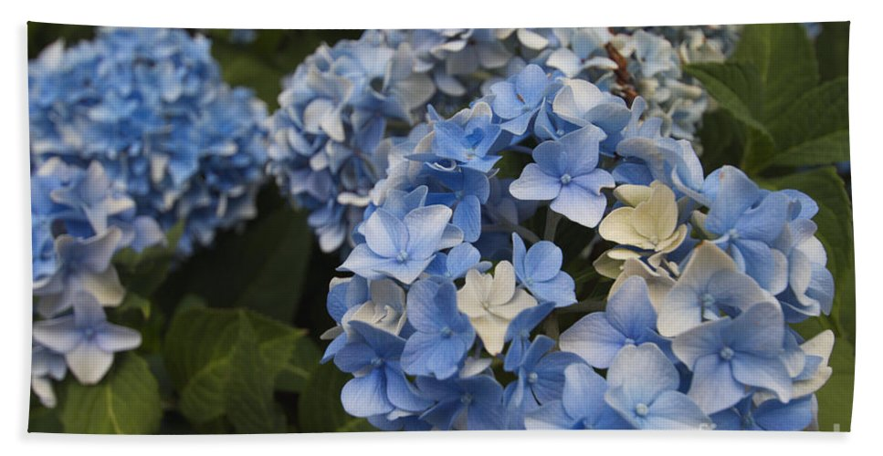 Flower Hand Towel featuring the photograph Blue Flowers by William Norton