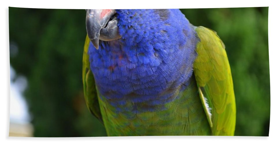 Blue Hand Towel featuring the photograph Blue Headed Pionus Parrot by Mary Deal