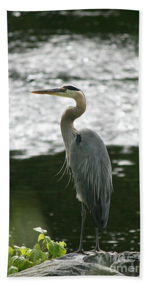 Great Blue Heron Bath Sheet featuring the photograph Fishing On The Quinnebaug by Neal Eslinger
