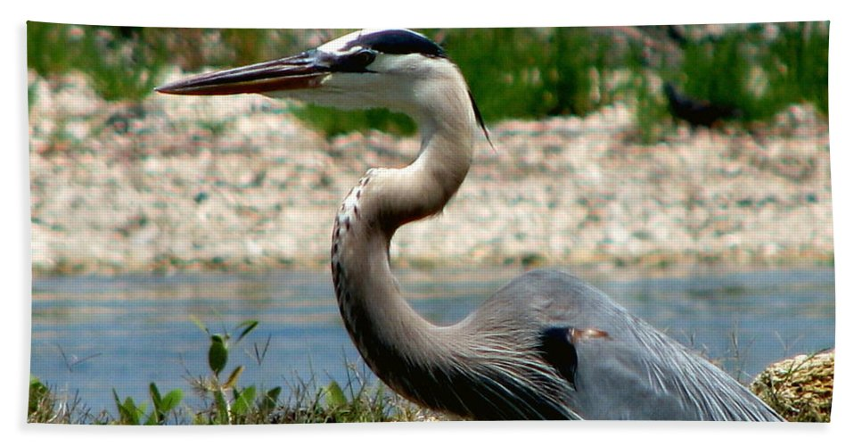 Art For The Wall...patzer Photography Bath Towel featuring the photograph Blue Heron by Greg Patzer