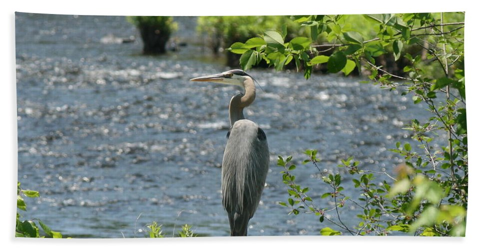 Heron Bath Sheet featuring the photograph Blue Heron River Fishing by Neal Eslinger