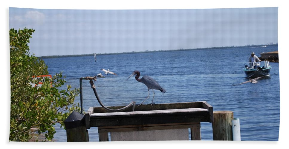 Need A Drink Hand Towel featuring the photograph Blue Heron by Robert Floyd