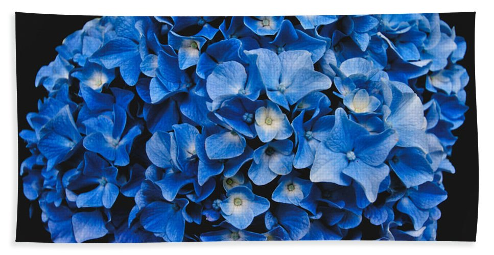 Blue Hydrangea Bath Towel featuring the photograph Blue Hydrangea 1 by William Norton