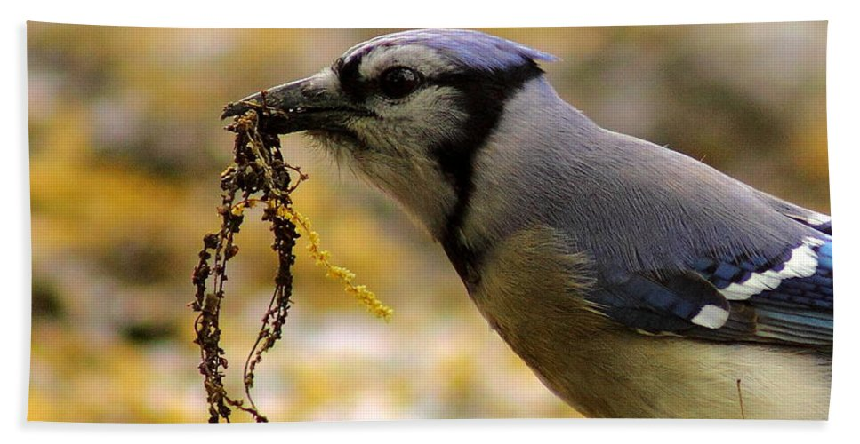 Animal Hand Towel featuring the photograph Blue Jay Nest Building by Robert Frederick