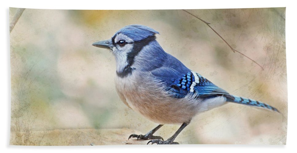 Bird Bath Sheet featuring the photograph Blue Jay With Verse by Debbie Portwood