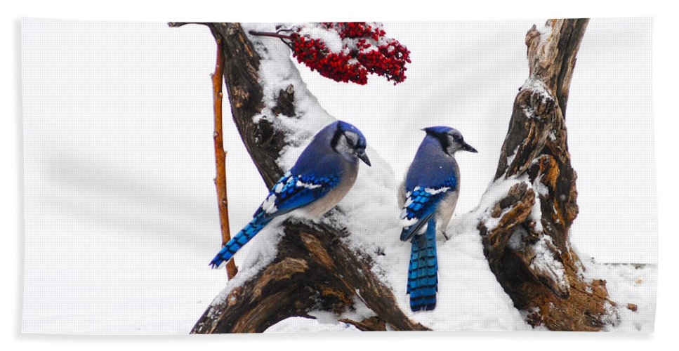 Blue Jays In Winter Bath Sheet featuring the photograph Blue Jays In Winter by Randall Branham