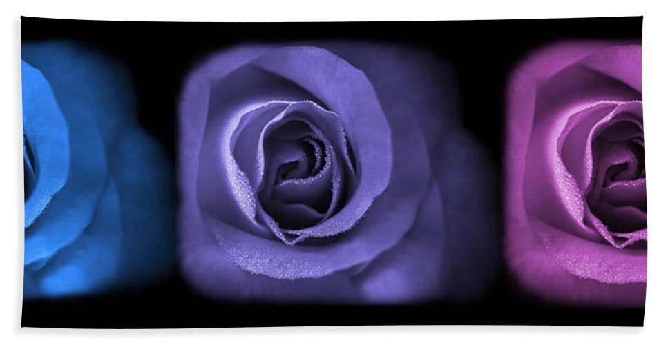 Rose Hand Towel featuring the photograph Blue Lavender Violet Roses Triptych by Jennie Marie Schell