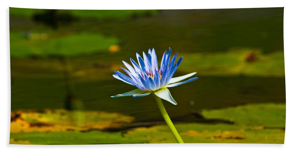 Lily Bath Sheet featuring the photograph Blue Lily by Darren Burton