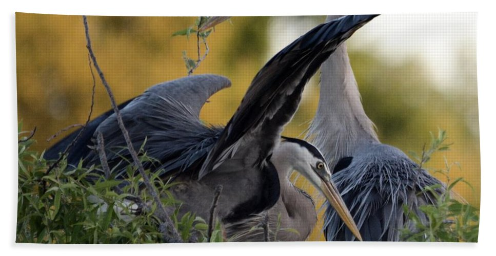 Courting Blue Herons Bath Sheet featuring the photograph Blue Love Is In The Air by Patricia Twardzik