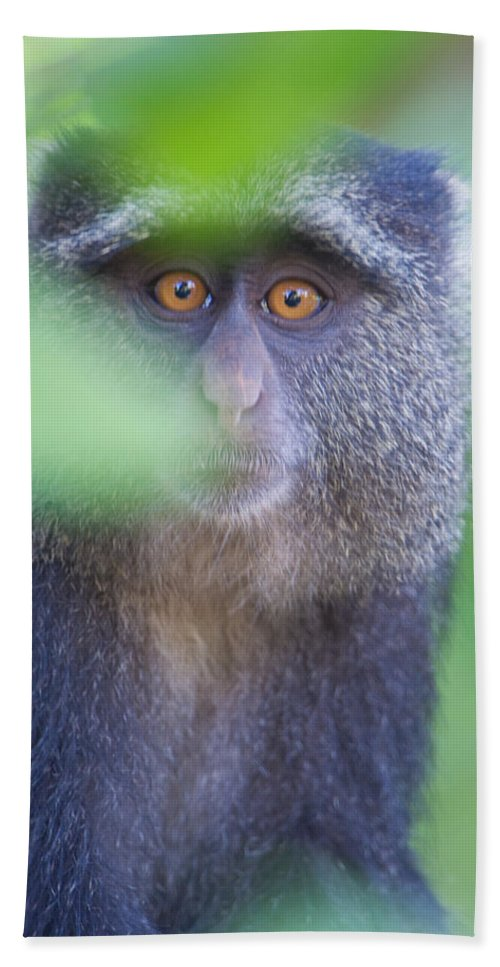 Photography Hand Towel featuring the photograph Blue Monkey Cercopithecus Mitis, Lake by Panoramic Images