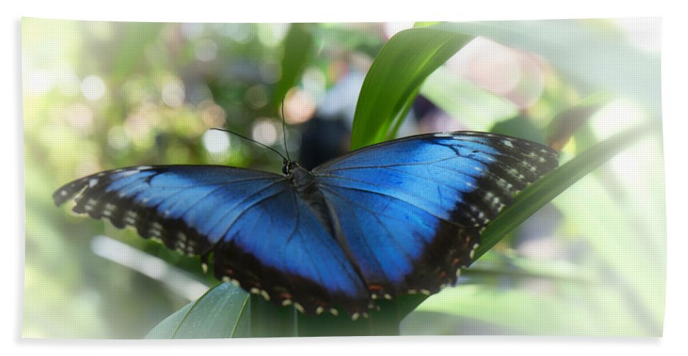 Blue Bath Sheet featuring the photograph Blue Morpho Butterfly Dsc00575 by Greg Kluempers