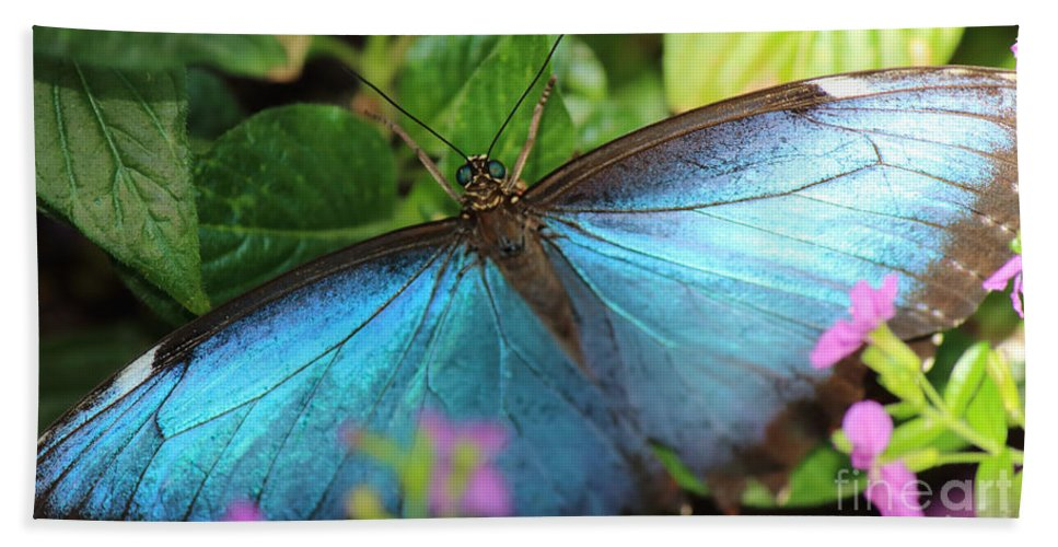 Photography Hand Towel featuring the photograph Blue Morpho by Jackie Farnsworth