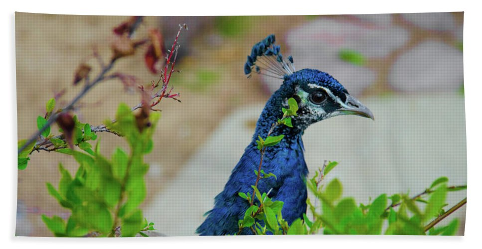 Banjiwayume Photography Hand Towel featuring the photograph Blue Peacock Green Plants by Jonah Anderson