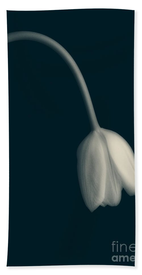Tulip Hand Towel featuring the photograph Blue Period by Edward Fielding