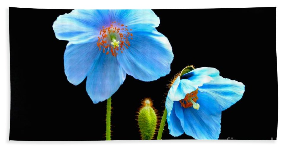 Blue Poppy Flowers Bath Sheet featuring the photograph Blue Poppy Flowers # 4 by Jeannie Rhode