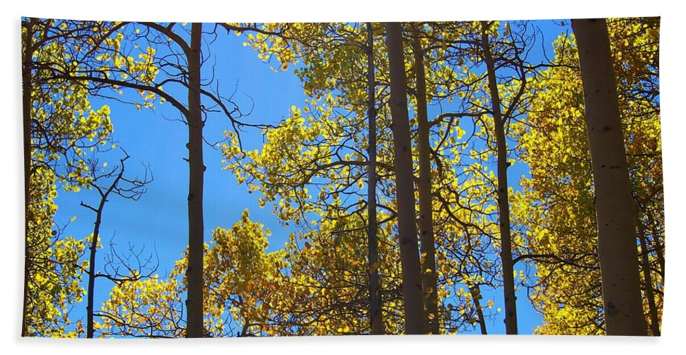 Aspen Bath Sheet featuring the photograph Blue Skies And Golden Aspen Trees by Amy McDaniel