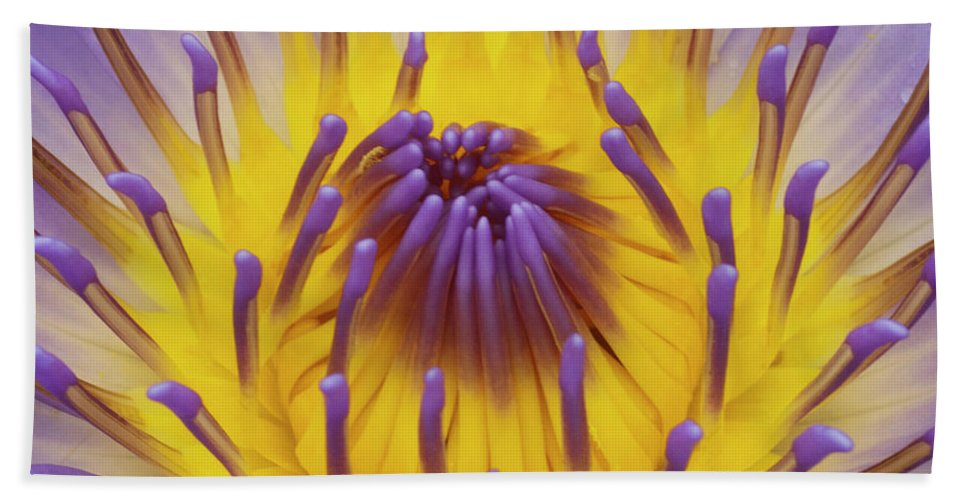 Water Lily Hand Towel featuring the photograph Blue Water Lily by Heiko Koehrer-Wagner