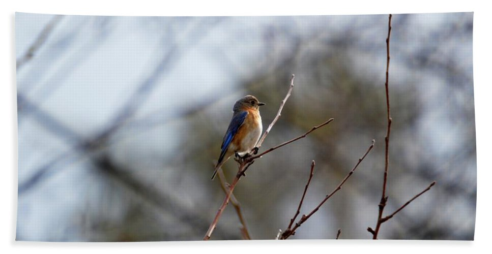 Bluebird Hand Towel featuring the photograph Bluebird In The Sun by Thomas Phillips