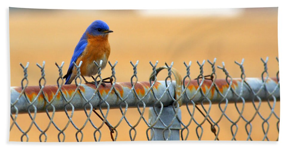 Bluebird Hand Towel featuring the photograph Bluebird On A Fence by Jason Politte