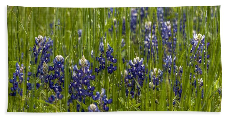 Bluebonnets Bath Sheet featuring the digital art Bluebonnets In The Grass by Linda Unger