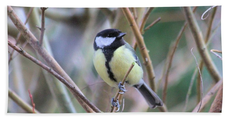 Bluetit Bath Towel featuring the photograph Bluetit by Gordon Auld