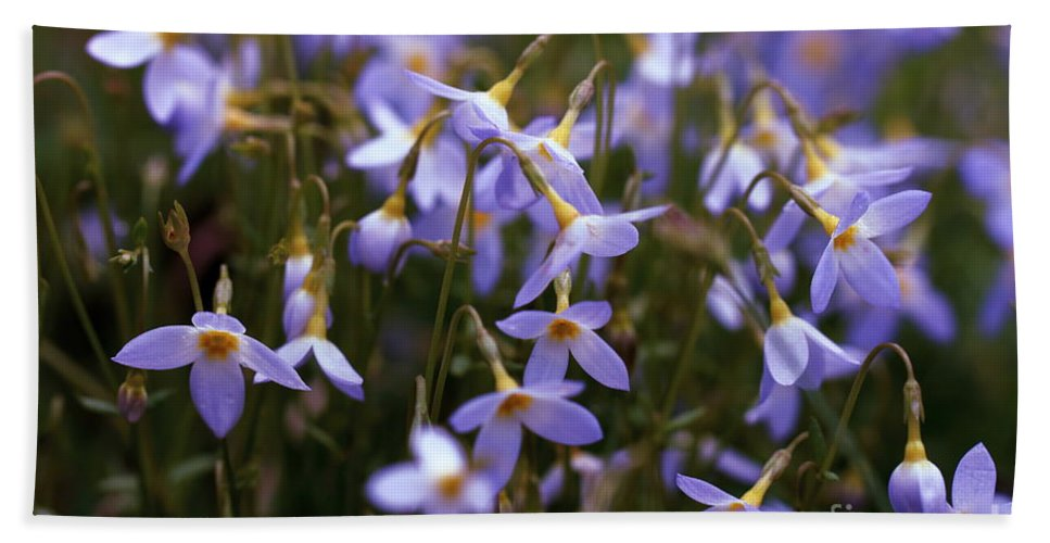 Bluets Bath Sheet featuring the photograph Bluets by David Rucker