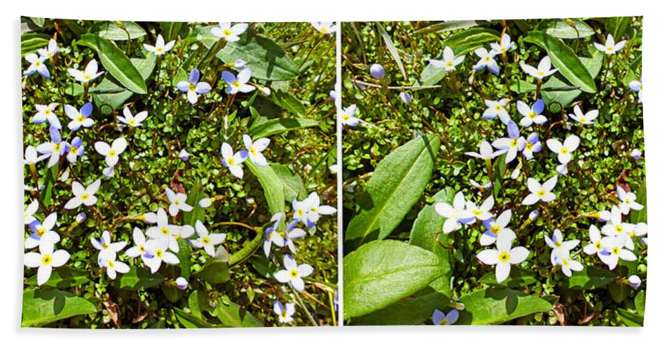 Plants Bath Sheet featuring the photograph Bluets In Stereo by Duane McCullough