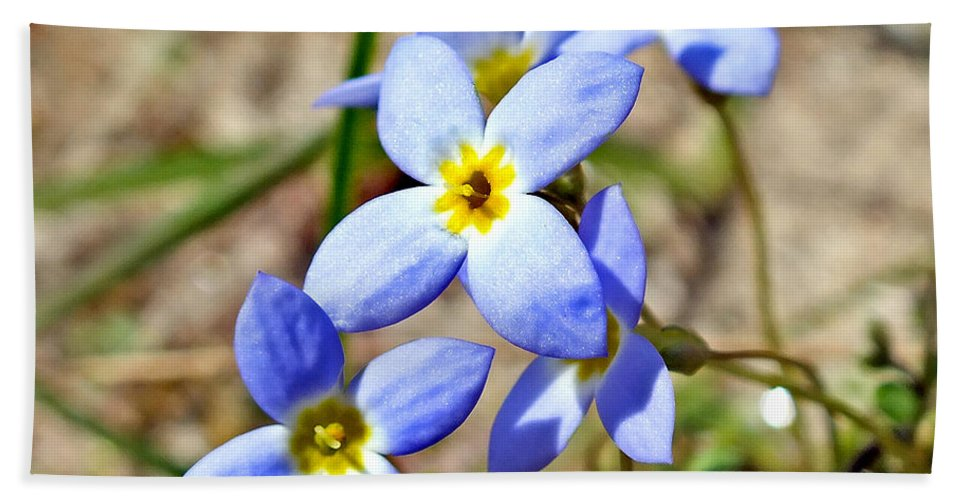Plants Bath Sheet featuring the photograph Bluets Upclose by Duane McCullough
