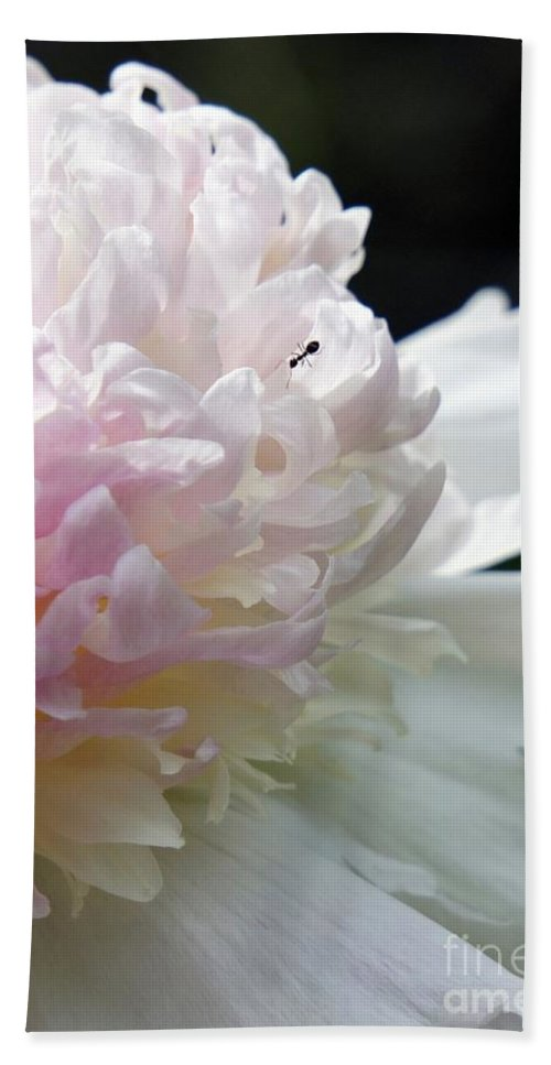 Blush Bath Sheet featuring the photograph Blushing Peony by Lilliana Mendez