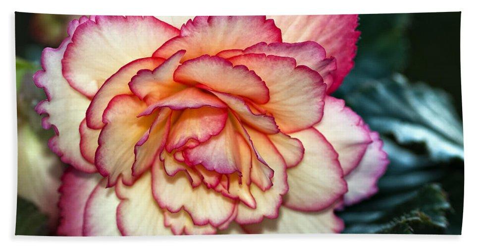 Begonia Bath Sheet featuring the photograph Blushing by Steve Harrington