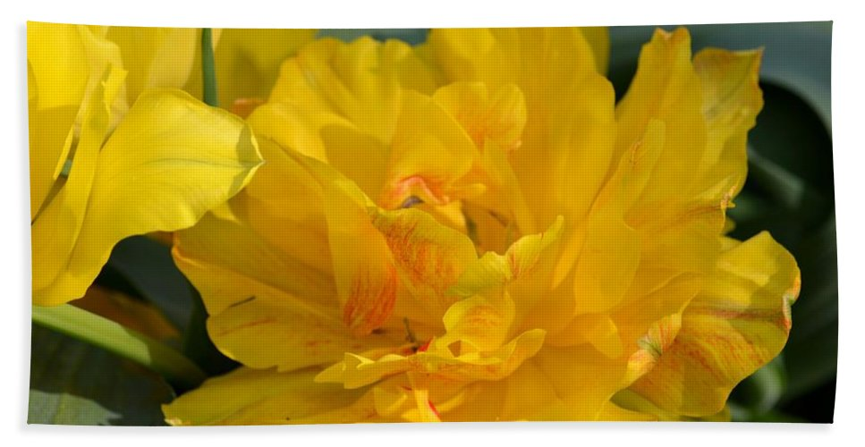Blushing Yellow Hand Towel featuring the photograph Blushing Yellow by Maria Urso