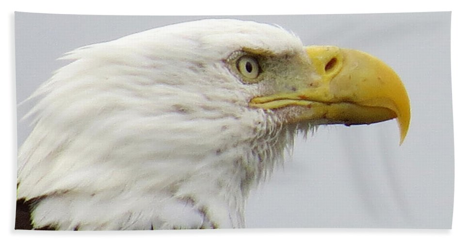 Bald Eagle Hand Towel featuring the photograph Bald Eagle by Stacey May