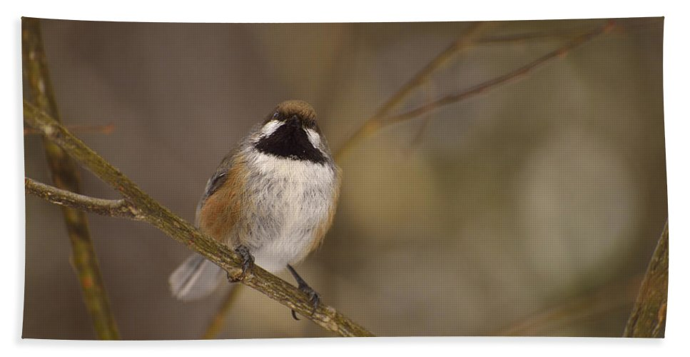 Boreal Chickadee Bath Towel featuring the photograph Bonding Boreal by Joshua McCullough
