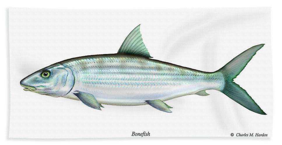 Charles Hand Towel featuring the painting Bonefish by Charles Harden