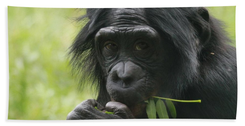 Bonobo Eating Bath Sheet featuring the photograph Bonobo Eating by Dan Sproul