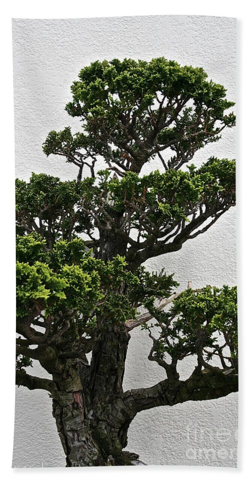 Tree Hand Towel featuring the photograph Bonsai Pine by Susan Herber